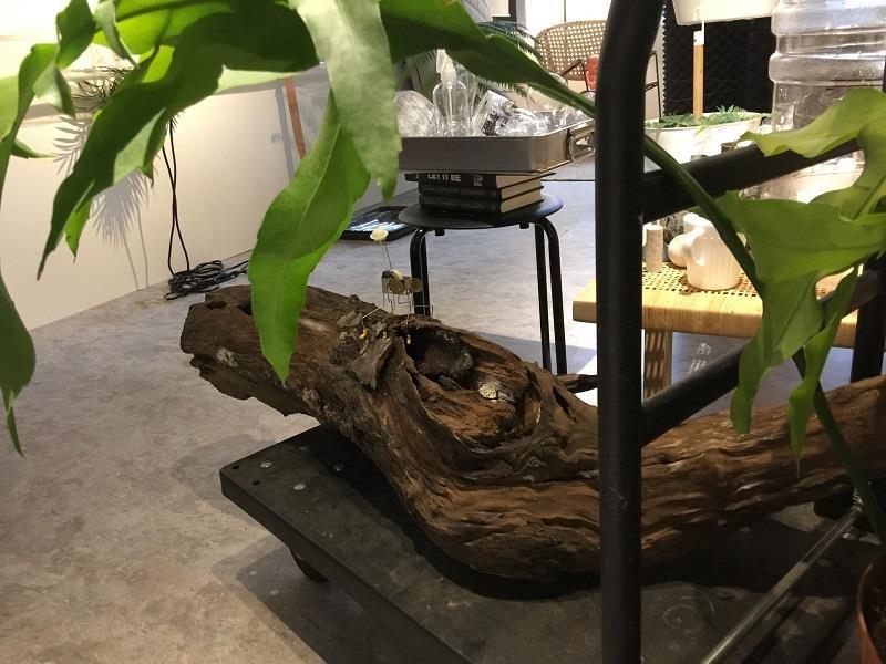 藝術家李霽表示,他喜歡讓植物在空間之中有著適當的距離,並善用鐵件與木材打造給予一個角落專屬的均衡呈現。攝影_曹靜宜
