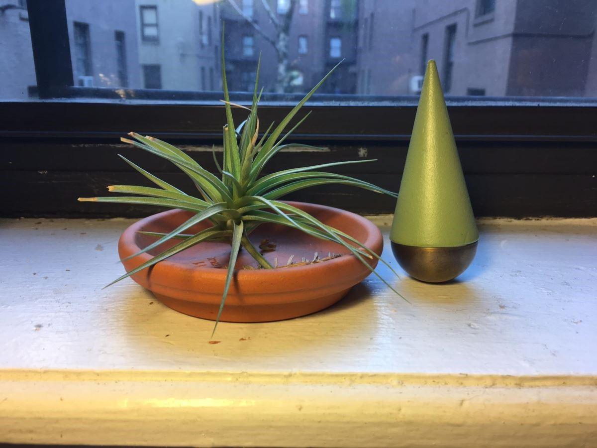 Vita Yang喜歡的植物與紙鎮收藏。