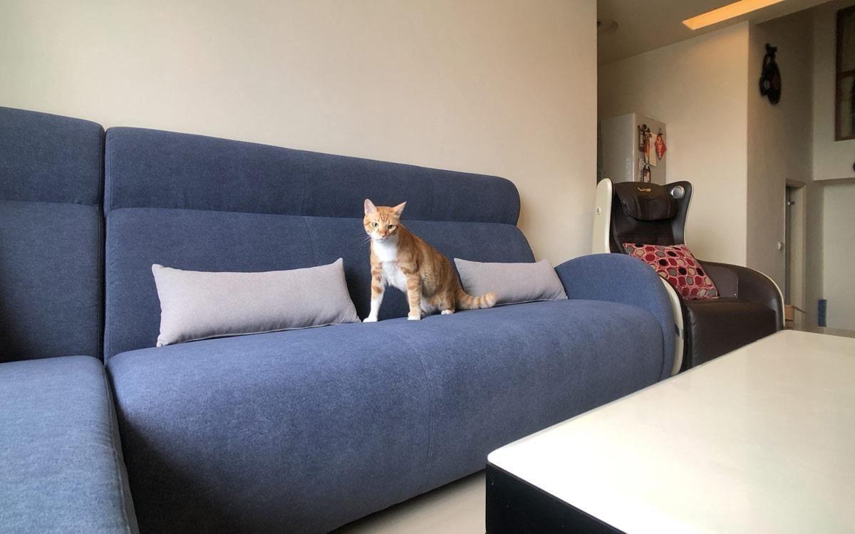 阿布吉沙發,使用抗汙防刮的超耐用以色列貓抓布,家裡有貓咪也不怕抓抓!