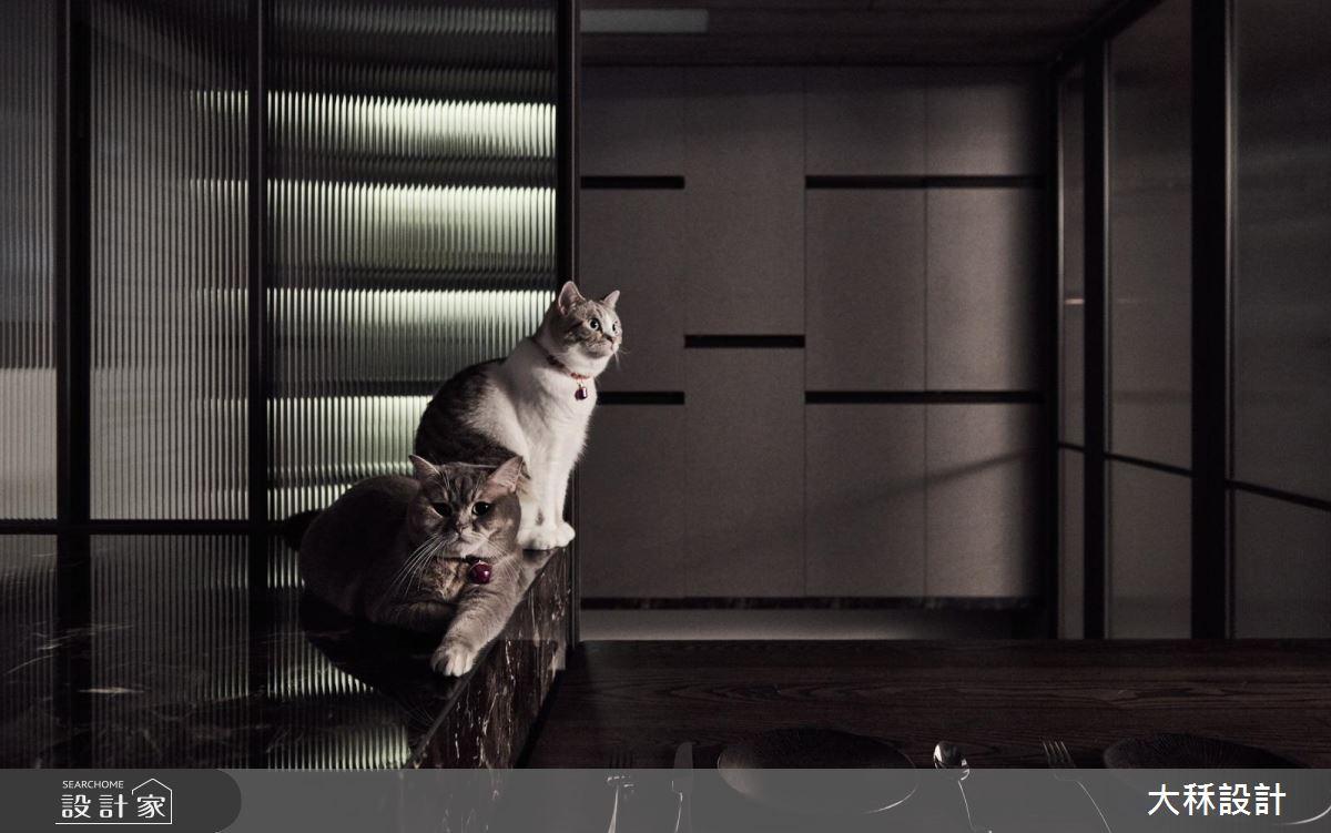 喵星人:「主人買的現代風小豪宅,朕最屬意這廚房吧檯」