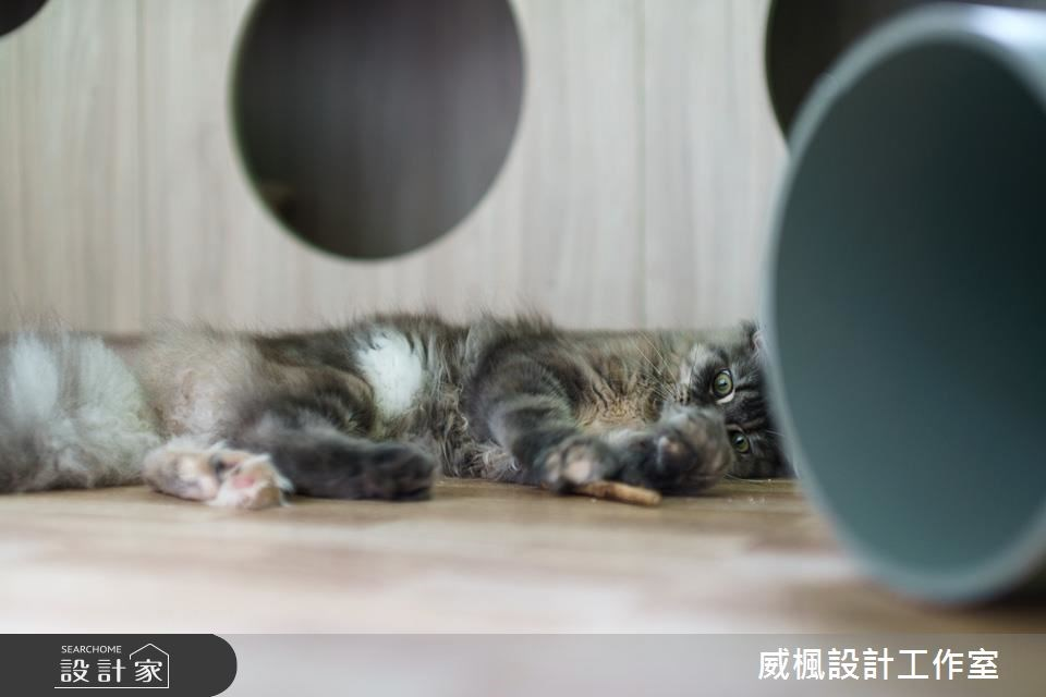 25坪中古屋(5~15年)_北歐風寵物案例圖片_威楓設計工作室_威楓_20之15