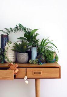 天然空氣清淨機! 9 款你一定要種在家裡的排毒綠栽