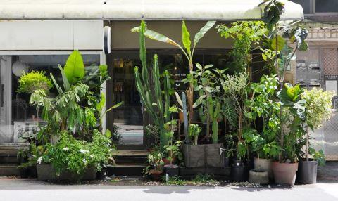 【夏日植型力I】葉力引爆篇!「Mrs. INOUE植物雜貨店」六款葉型美、好照顧的大型觀葉植物推薦