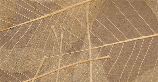 泛亞材料 PA Material -阿爾卑斯山的氣味_葉子骨架-阿爾卑斯山的氣味_葉子骨架,泛亞材料 PA Material ,美耐板