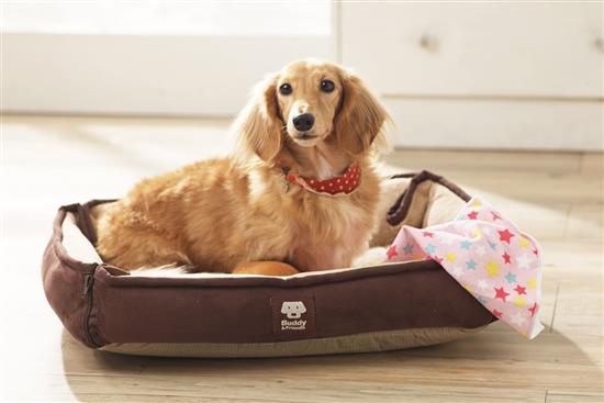 Convertible Bed 寵物舒適兩用床-設計小物